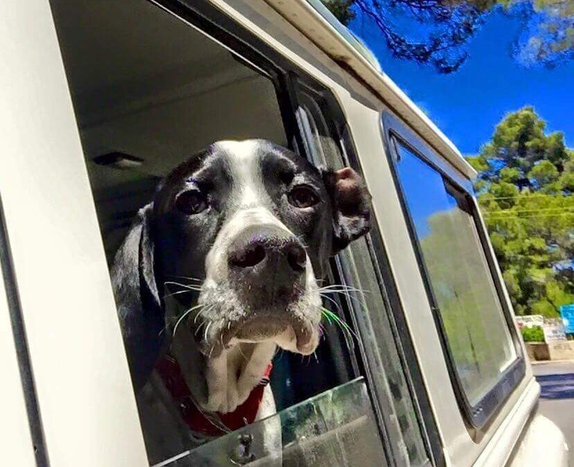 Dog allowed on a camper trip